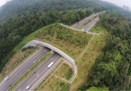 ●Eco-ducts or Eco-bridges